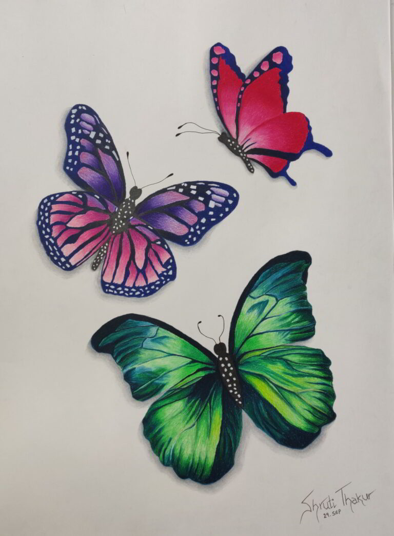 Shanky Studio Butterfly Pencil Color Free Art Class